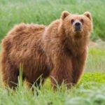 संगड़ाह उपमंडल के उच्चा टिक्कर गांव के जंगल में अचानक एक भालू...