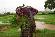 18 हेक्टेयर भूमि पर हमीरपुर में औषधीय होगी खेती