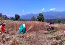किसानों की फसल के नुकसान का उचित मुआवजा दें सरकार-Panchayat Times
