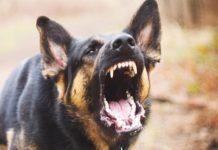 भुंतर में कुत्ते के काटने से बच्चे की हालत गंभीर