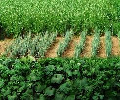 ऑर्गेनिक खेती करने वाले किसानों के लिए अच्छी खबर-Panchayat Times