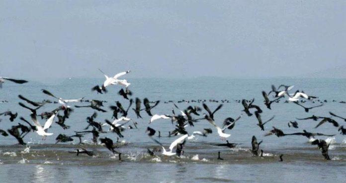 पौंग झील में डूबे उत्तर प्रदेश के युवक का शव बरामद-Panchayat Times