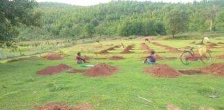 बिरसा हरित ग्राम योजना के तहत पूर्वी सिंहभूम में लगाये जा रहे है फलदार पौधे - Panchayat Times