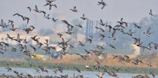 देश में तेजी से फैल रहा है बर्ड फ्लू, केरल में आपदा घोषित, हिमाचल में 1,800 प्रवासी पक्षियों की मौत, राजस्थान, मध्य प्रदेश, गुजरात और हरियाणा में भी अलर्ट - Panchayat Times